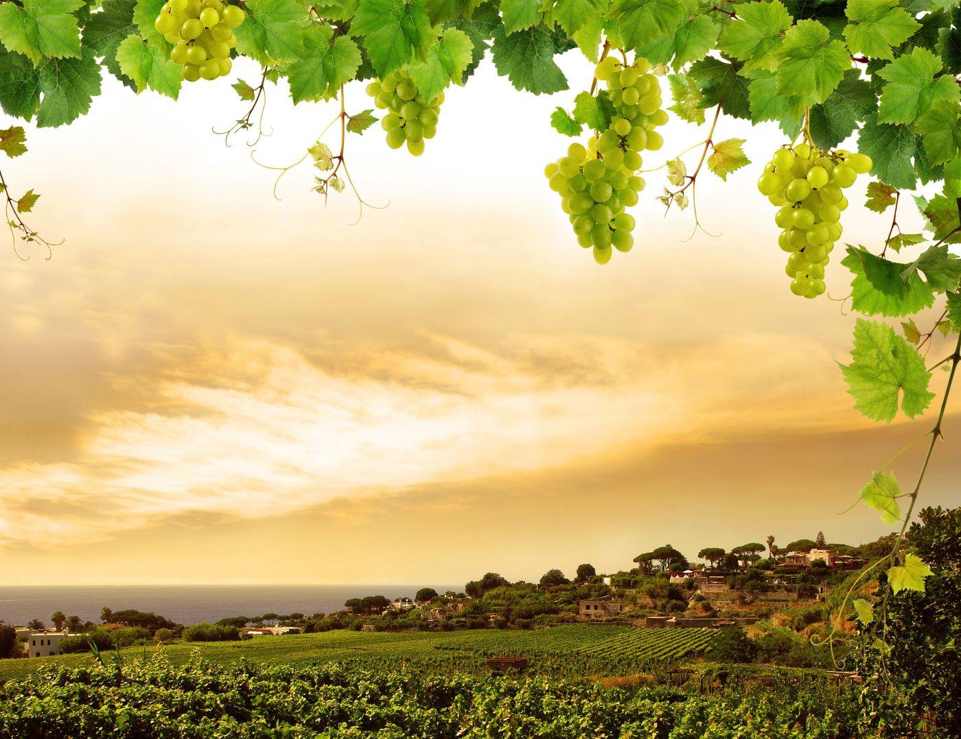 Route des vins de Bordeaux - Itinéraire Graves et Sauternes