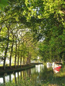 Platanes sur le canal du Midi