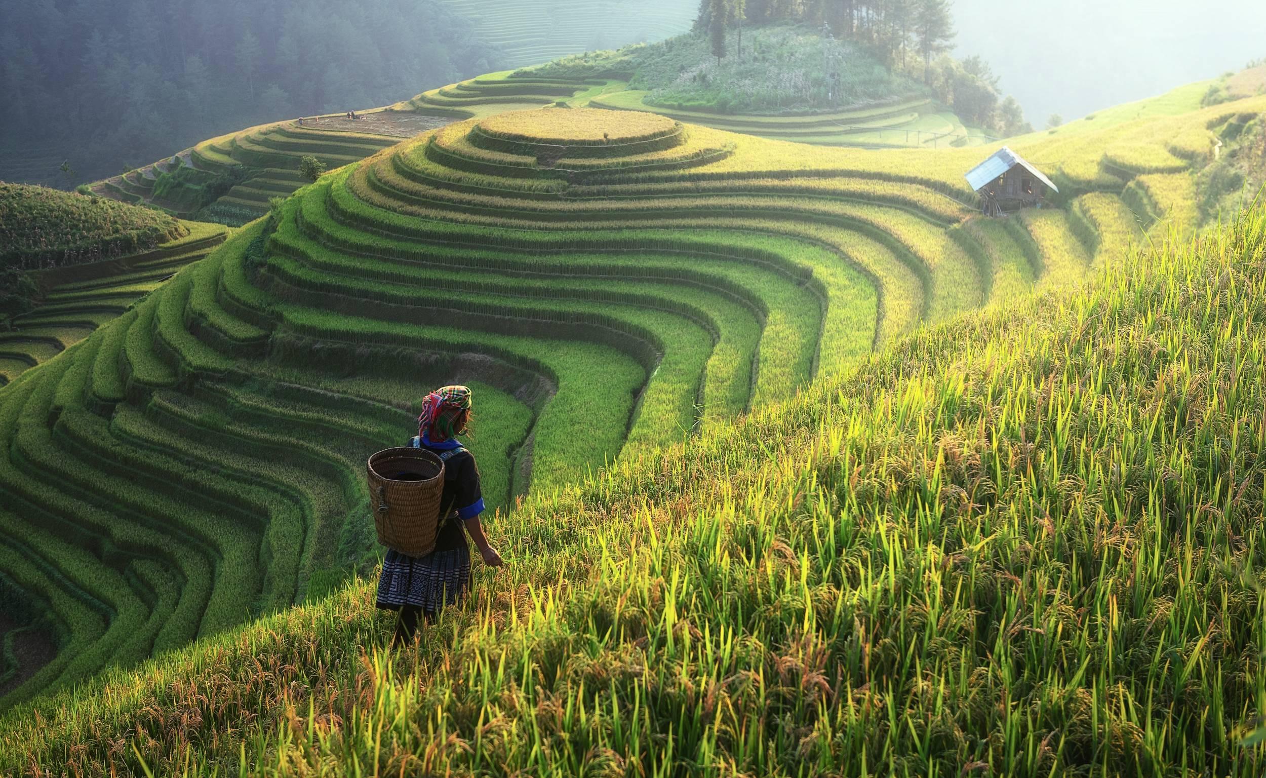 Muong Hoa Valley au Vietnam
