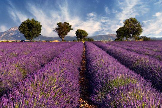 Plateau de Valensole - Dans les plus beaux paysages de France