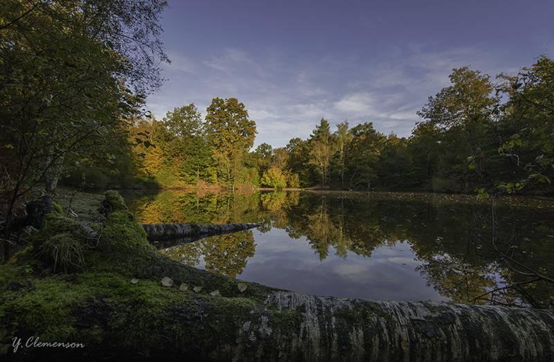 Paysage en Forêt de Rambouillet