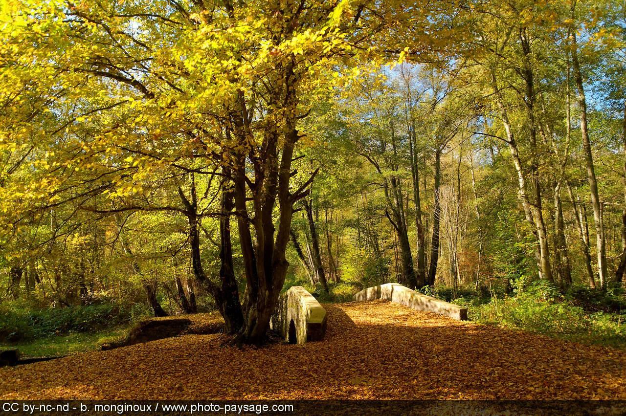 Pont en Forêt de Rambouillet