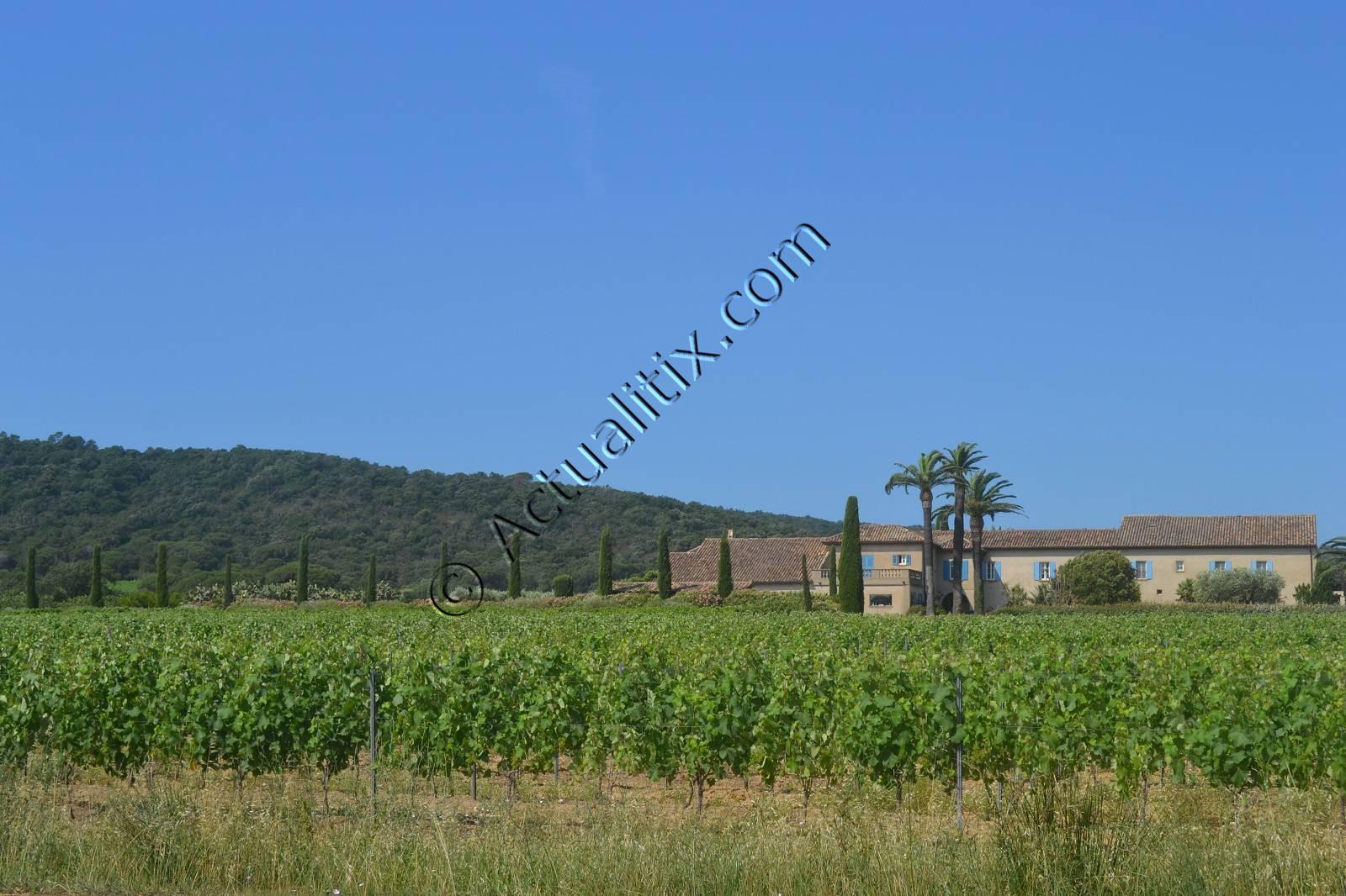 Vignes à proximité de Pampelonne