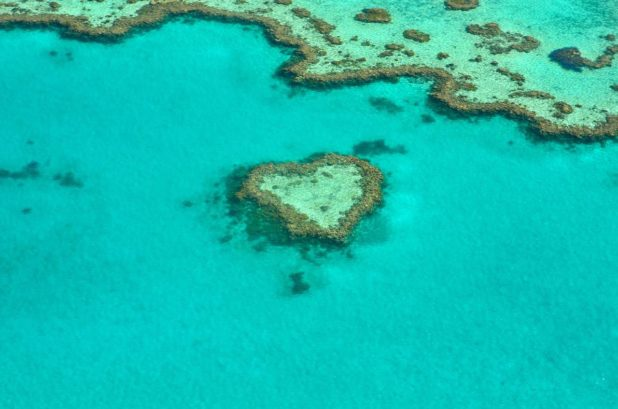 Coraux en forme de coeur