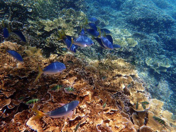 Sous l'eau dans la grande barrière de corail