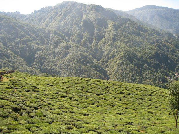 Colline vue depuis le petit de Darjeeling