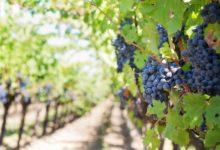 Vins du Val de Loire